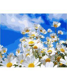 Картина по номерам Полевые ромашки 40 х 50 см (BK-GX8436)