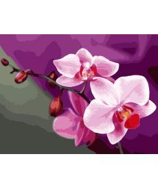 Картина по номерам Розовые орхидеи 40 х 50 см (KHO1081)