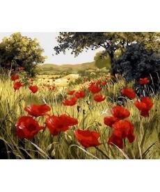 Картина по номерам Маковая поляна 40 х 50 см (MR-Q1432)