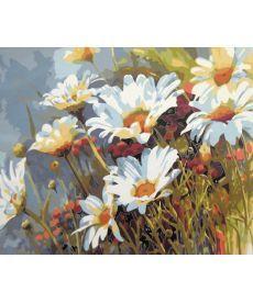 Картина по номерам Ромашковое поле 40 х 50 см (MR-Q1439)