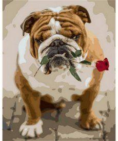 Картина по номерам Английский бульдог с розой 40 х 50 см (MR-Q1785)