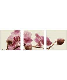 Картина по номерам Триптих. Розовые орхидеи Триптих 50 х 150 см (MS14067)