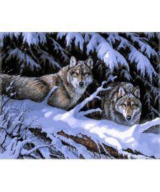 Картина по номерам Волки в лесу 40 х 50 см (VP121)