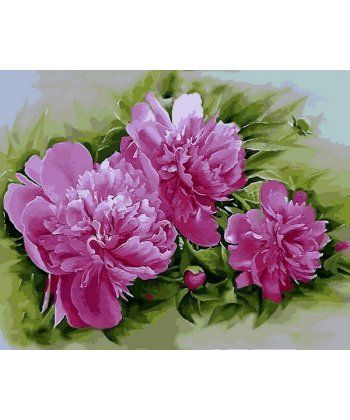 Картина по номерам Розовые пионы 40 х 50 см (MR-Q2184)  - Фото 1