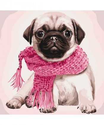 Картина по номерам Мопс в шарфике 40 х 40 см (KHO4107)  - Фото 1