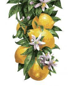Картина по номерам Лимонное дерево 30 х 40 см (AS0315)