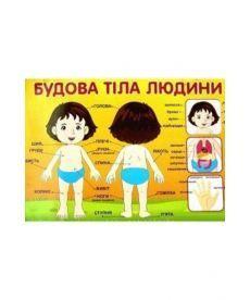Плакат.Будова тіла людини