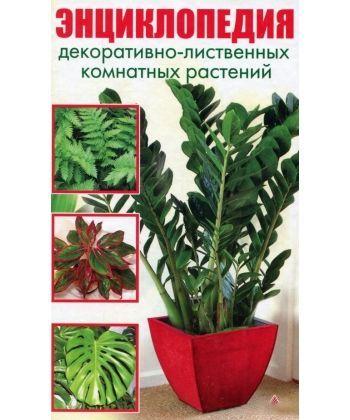 Энциклопедия декоративно-лиственных комнатных растений (нов обл)