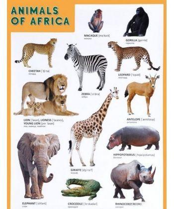 Animals of Afrika (Животные Африки)