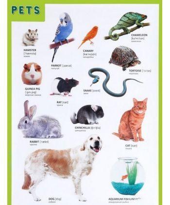 Pets (Домашние питомцы)