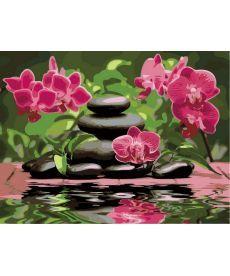 Картина по номерам Лиловые орхидеи 30 х 40 см (VK014)