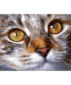 Картина по номерам Кошачий взгляд 40 х 50 см (VP1022)