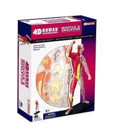 4D Master Объемная анатомическая модель Мускулы и скелет человека