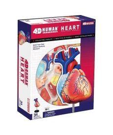 4D Master Объемная анатомическая модель Сердце человека