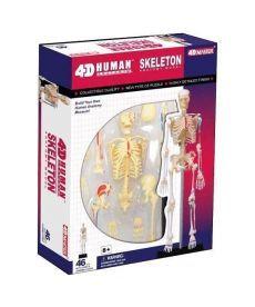 4D Master Объемная анатомическая модель Скелет человека