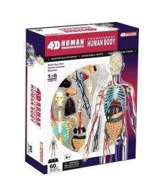 4D Master Объемная анатомическая модель Тело человека прозрачное