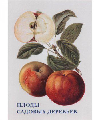 Плоды садовых деревьев