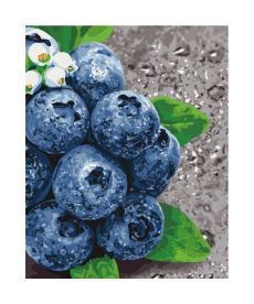 Картина по номерам Сочные плоды  40*50 см  (KHO5581)