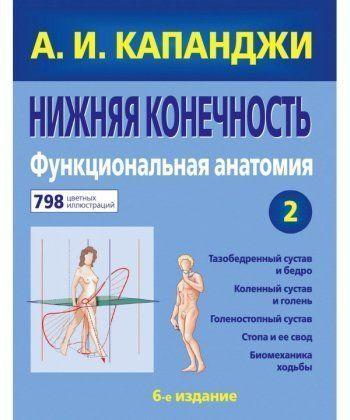 Нижняя конечность: Функциональная анатомия