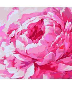 Картина по номерам  Розовый пион 2  30*30 см (KHO2949)